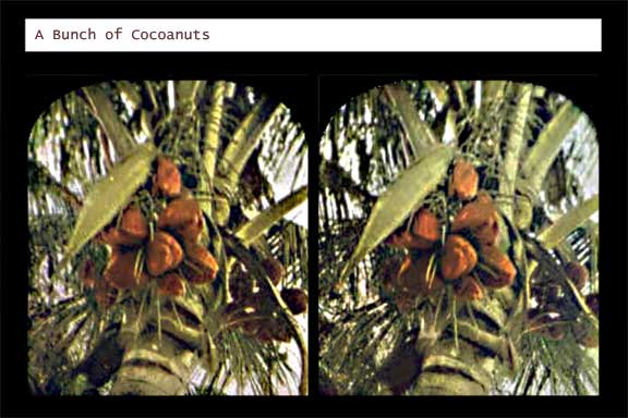 Going Nuts - Cocoanuts that is...